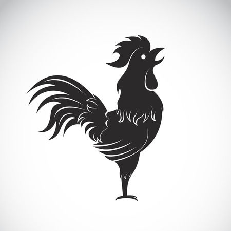 cock: Vector image of an cock on white background