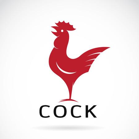gallo: Imagen vectorial de un diseño de la polla en el fondo blanco