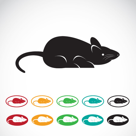 varmint: Vector image of an rat on a white background Illustration