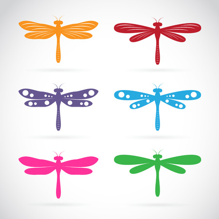 Vector group of colorful dragonfly on white background