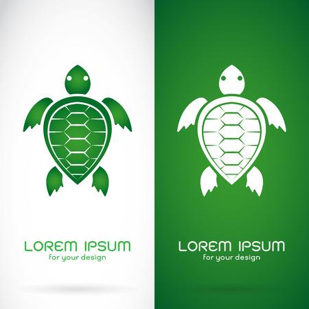 tortuga caricatura: Imagen del vector de un dise�o de la tortuga en el fondo blanco y el fondo verde, logotipo, s�mbolo