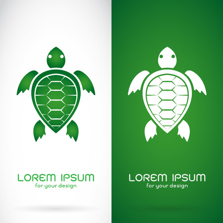 sea turtle: Vector image of an turtle design on white background and green background, Logo, Symbol