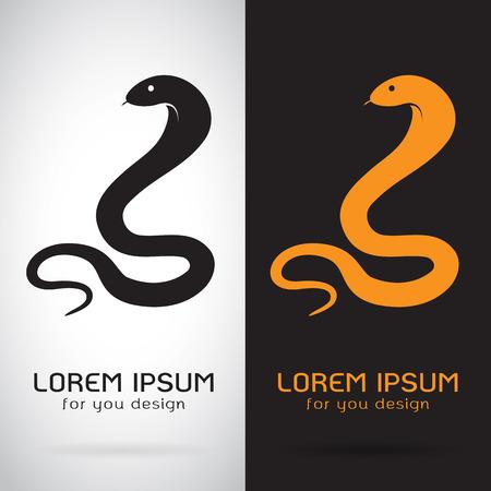 orange snake: snake on white background and black background