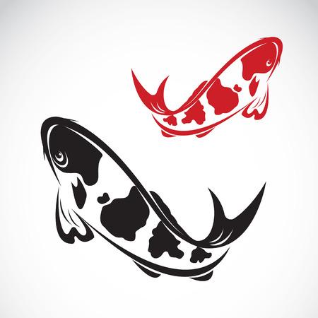 Vector Bild von einem Karpfen Koi auf weißem Hintergrund