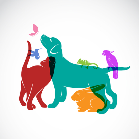 veterinary icon: Vector group of pets - Dog, cat, parrot, chameleon, rabbit, butterfly, hummingbird isolated on white background