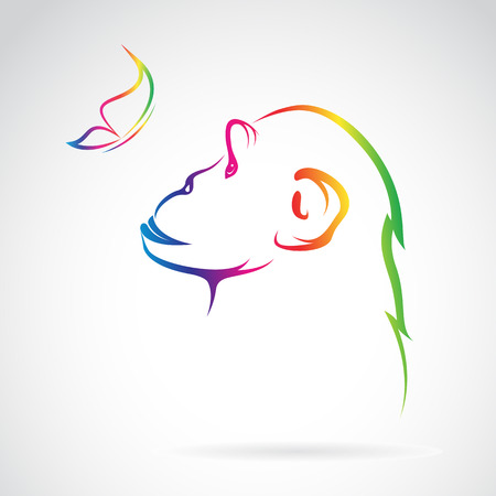 confidant: Vector image of monkey and butterfly on white background