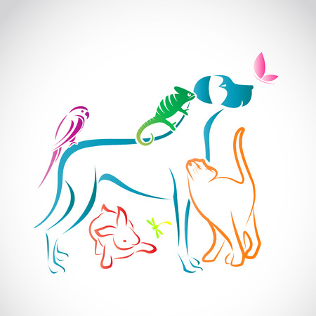 Vector group of pets - Dog, cat, parrot, chameleon, rabbit, butterfly, dragonfly isolated on white background Illustration