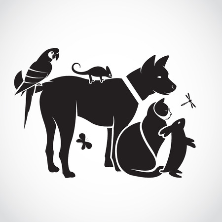 loro: Grupo de vector de animales domésticos - perro, gato, loro, camaleón, conejo, mariposa, libélula aislados sobre fondo blanco