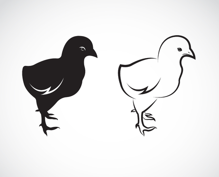 Vector image of an chick design on white background Ilustração