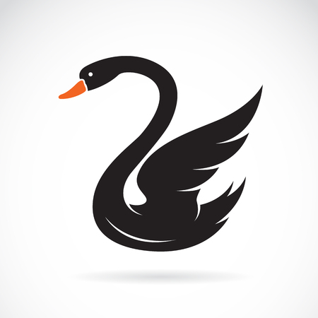 black swan: Vector image of swans on white background.