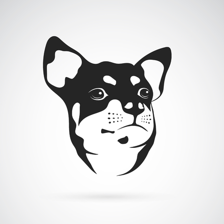 black dog: Vector image of an chihuahua dog on white background
