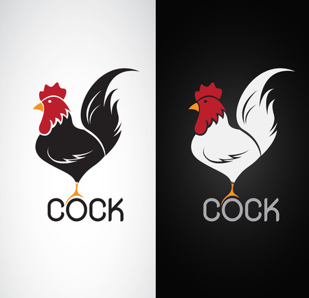 Vector image of an cock design on white background and black background
