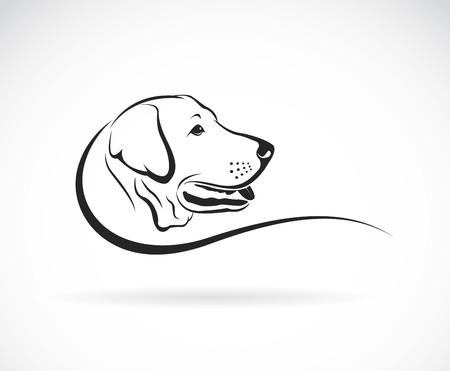 perro labrador: Vector de imagen de una cabeza de perro labrador sobre fondo blanco