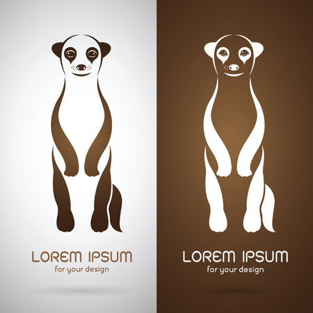 mongoose: Vector image of an meerkats design on white background and brown background, Logo, Symbol