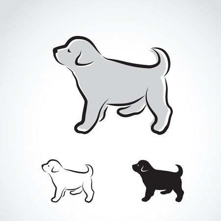 labrador puppy: Vector image of an labrador puppy on white background Illustration