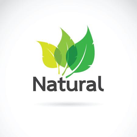 白い背景の上の自然なロゴ デザイン ベクトル テンプレートです。リーフのアイコン