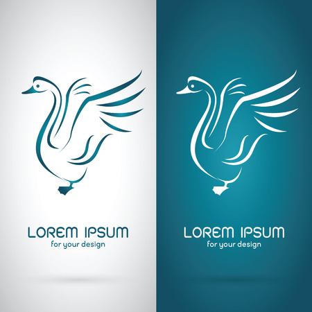 swan: Vector image of an swan design on white background and blue background, Logo, Symbol