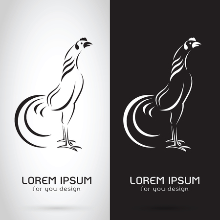 Vector image of an rooster design on white background and black background, Logo, Symbol, cock,chicken