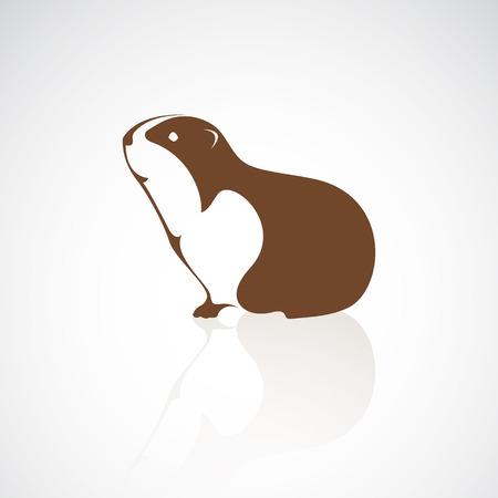 guinea design on white background Illustration