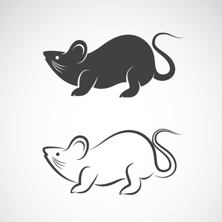 guinea: rat design on white background