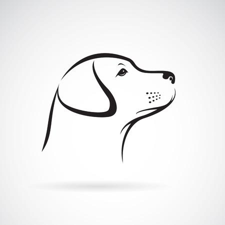 turn up: dog labrador on white background
