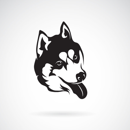 siberian husky on white background