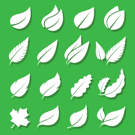 feuille arbre: Vecteur feuilles blanc, icône, ensemble sur fond vert Illustration