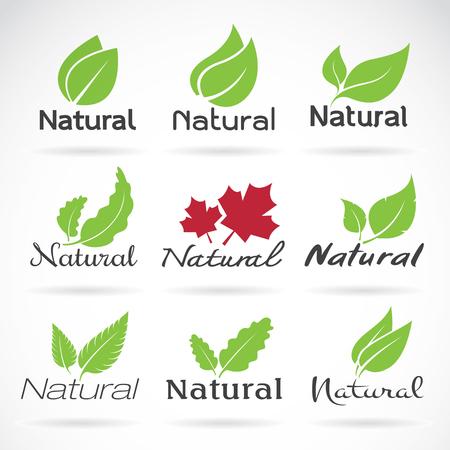 productos naturales: logotipo de la plantilla de diseño vector natural en el fondo blanco. icono de la hoja Vectores