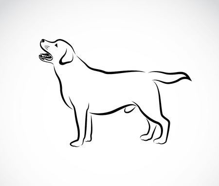 black dog: Vector image of an dog labrador on white background