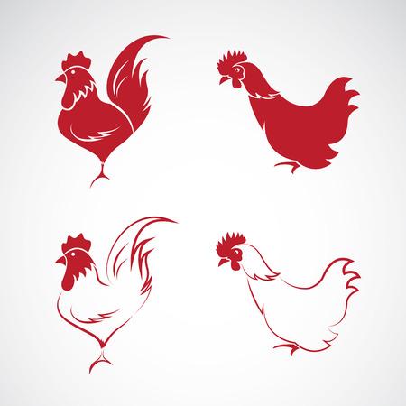 oiseau dessin: Image d'une conception de poulet sur fond blanc