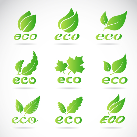 Green leaves design. Ecology icon set. Green eco icons badge