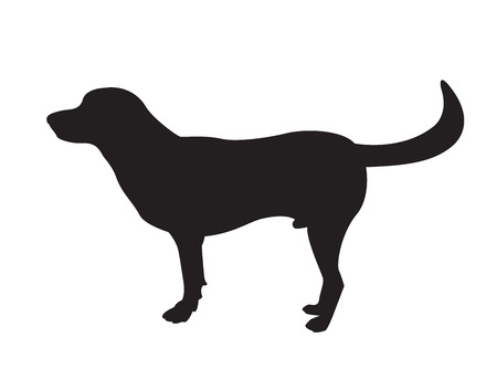 Image of an dog labrador on white background