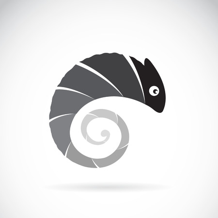 Vector image of an chameleon design on white background