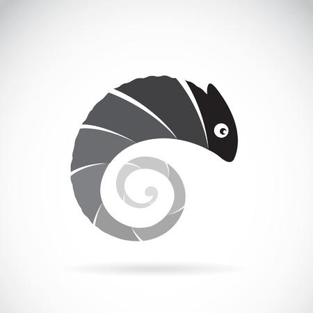 Vector image of an chameleon design on white background