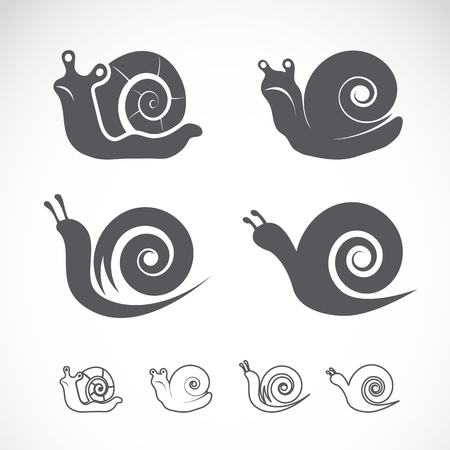 Vector group of a snail on white background Illustration