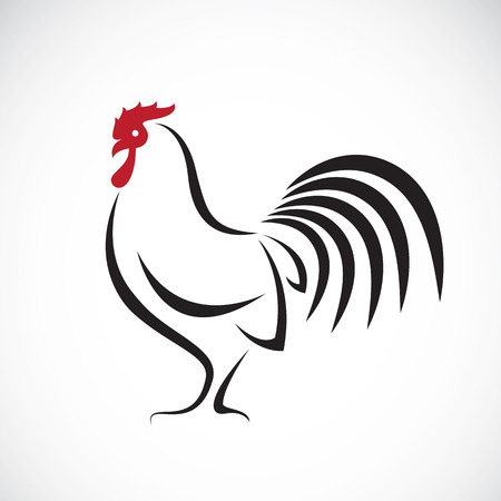 poultry: Vector image of an cock design on white background