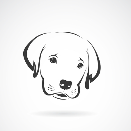 labrador puppy: Vector image of an labrador puppy face on white background. Dog