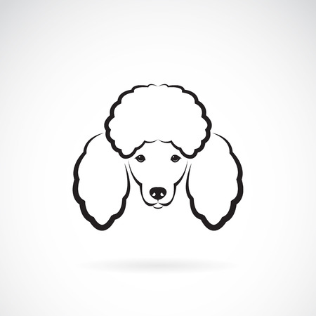 vector image: Vector image of an dog poodle face on a white background Illustration