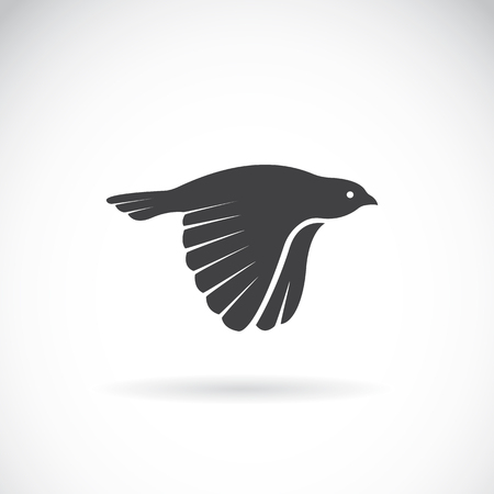 bird flying: Vector image of an bird icon on white background. Finch