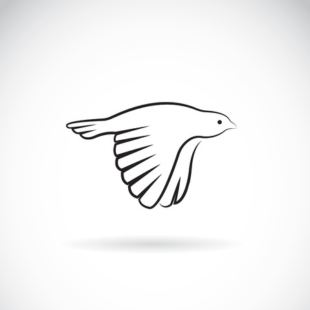 finch: Vector image of an bird icon on white background. Finch