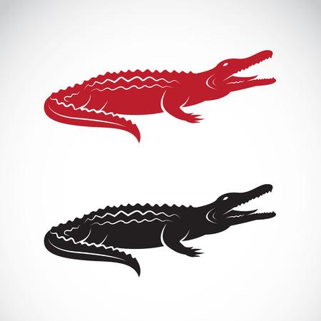 흰색 배경에 악어 디자인의 이미지
