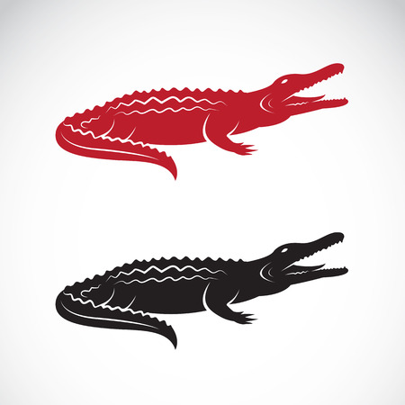 image of an crocodile design on white background