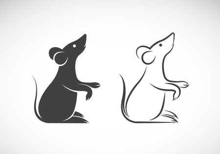 guinea: image of an rat design on white background