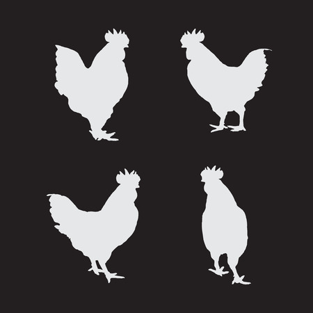livestock: image of an chicken on a black background.