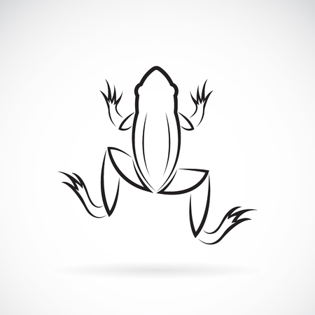 webbed legs: Vector image of an frog design on white background.