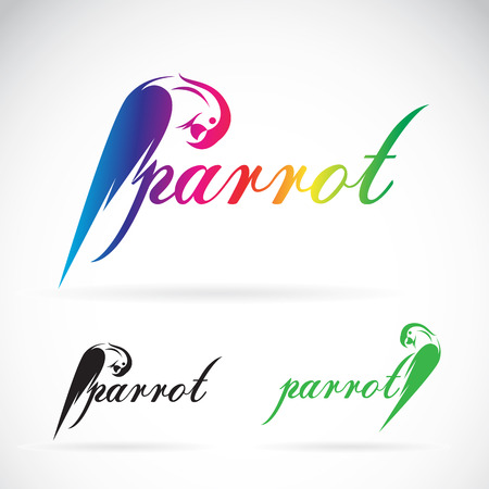 Vector image of a parrot design on white background. / Vector parrot for your design.