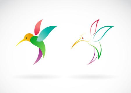 Vector image of an hummingbird design on white background, / Vector Hummingbird for your design. Stock Illustratie