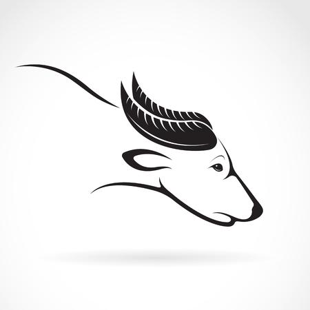 water buffalo: image of an buffalo design on white background. buffalo for your design.