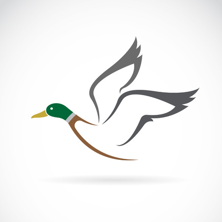 白い背景の上の飛行の鴨デザインのベクター画像。