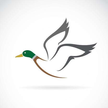 Obrazu wektorowego latania dzikich kaczek projektowania na białym tle.
